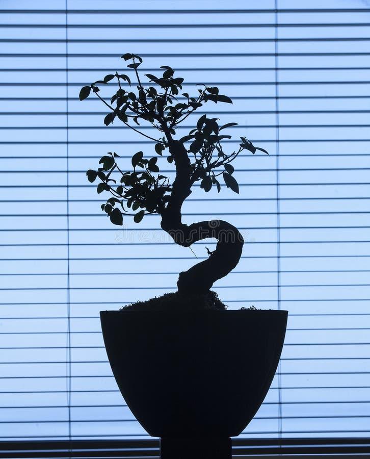 Bonsaikontur fotografering för bildbyråer