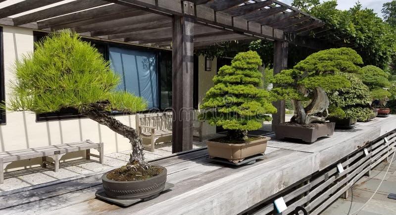 Bonsaiminiaturbäume lizenzfreie stockfotos