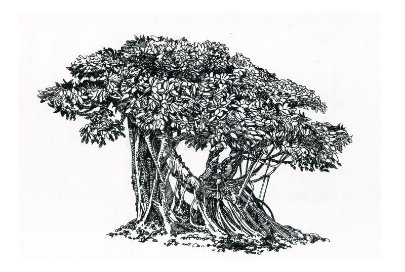 Bonsais, árbol viejo, ficus con las raíces aéreas fotos de archivo libres de regalías