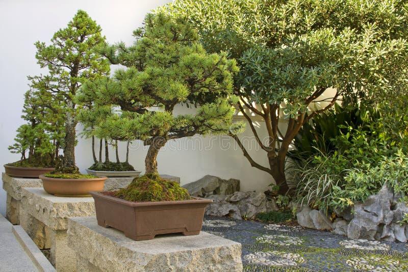 Bonsais-Bäume im chinesischen Garten lizenzfreie stockfotografie