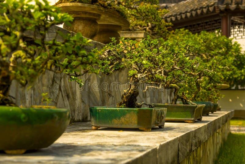 Bonsais en el jardín japonés de Singapur foto de archivo libre de regalías