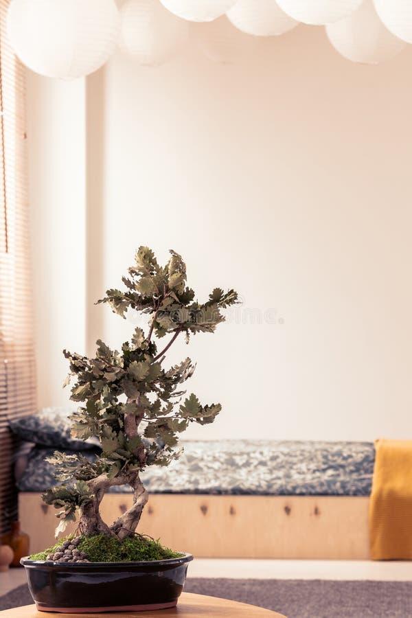 Bonsais no interior branco mínimo do quarto no estilo japonês foto de stock royalty free