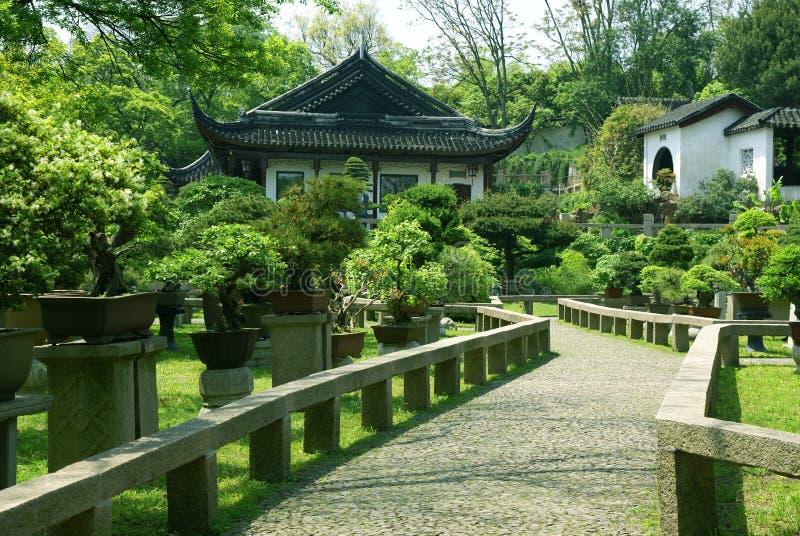 Bonsaisbäume am chinesischen traditionellen Garten lizenzfreie stockbilder