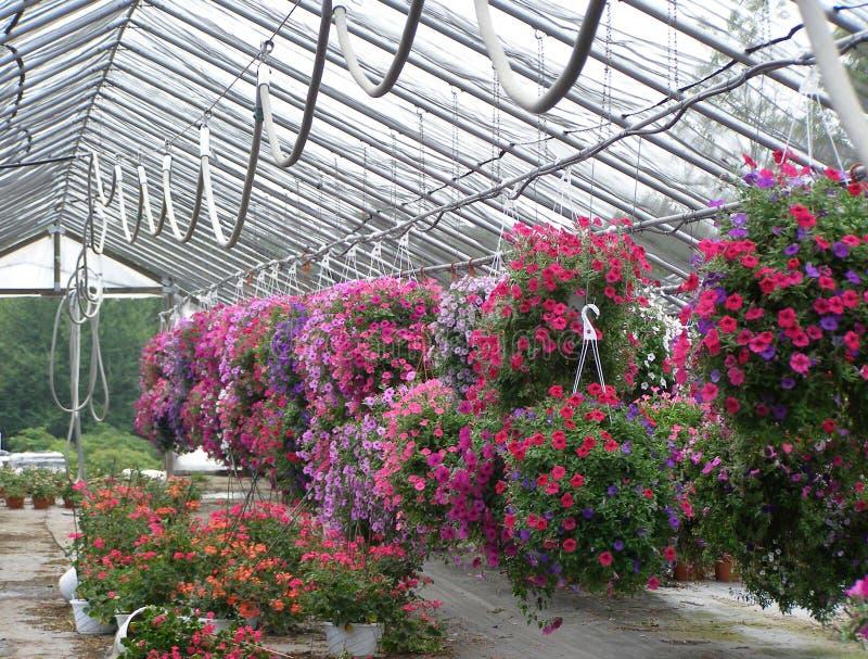 Bontà delle fioriture fotografia stock