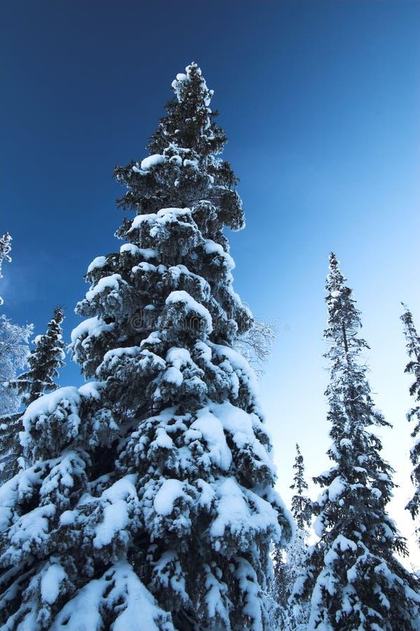 Bont-bomen onder een sneeuw royalty-vrije stock foto
