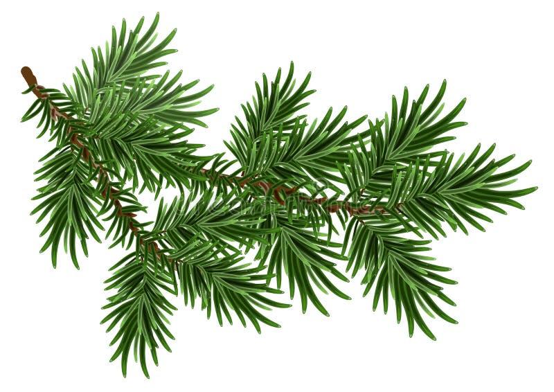 Bont-boom tak Groene pluizige pijnboomtak stock illustratie