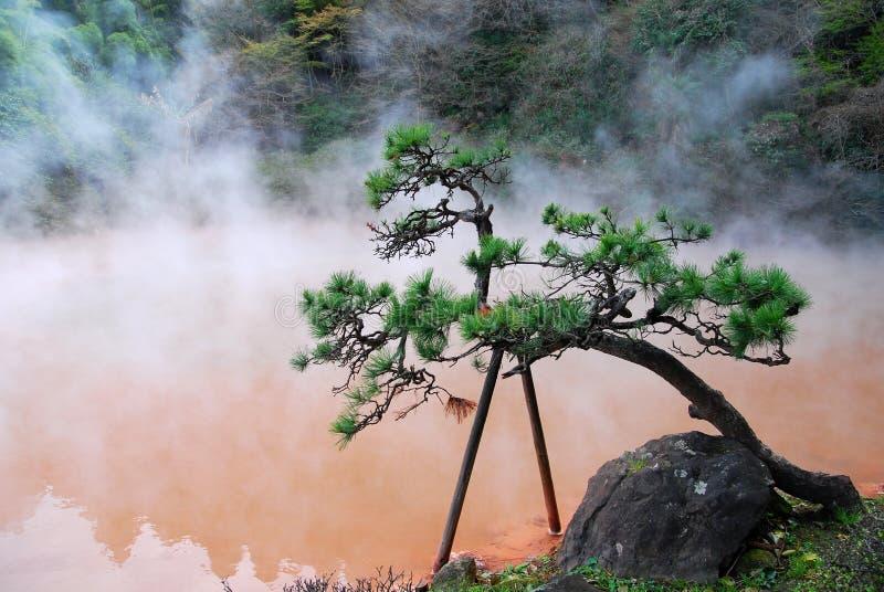 Bonzai树和温泉 免版税库存图片