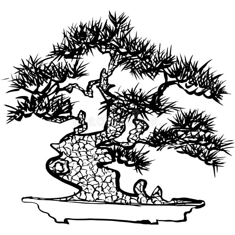Bonzaies Arbre de pin japonais Illustration tirée par la main illustration libre de droits