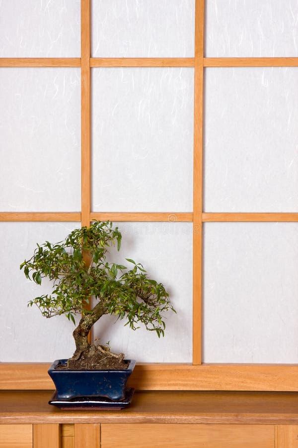 Bonzaies dans la chambre japonaise images stock