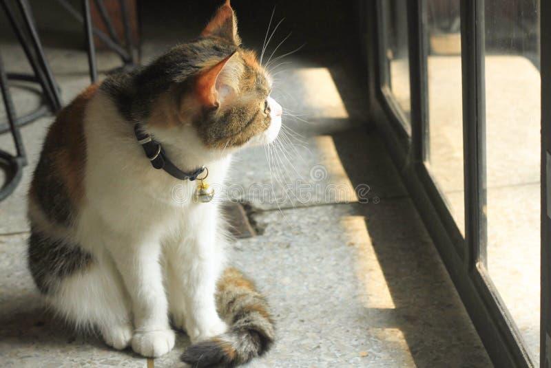 Bonze sitzt das Schauen aus der Glastür heraus stockfotos