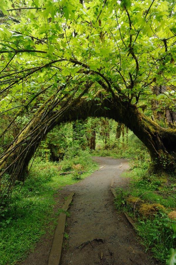 Boog in regenwoud stock fotografie