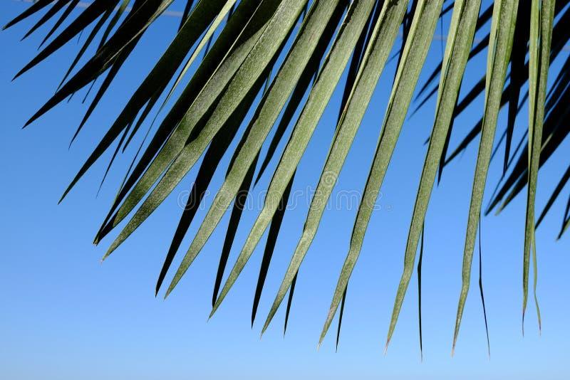 Boog van palmbladen royalty-vrije stock foto's