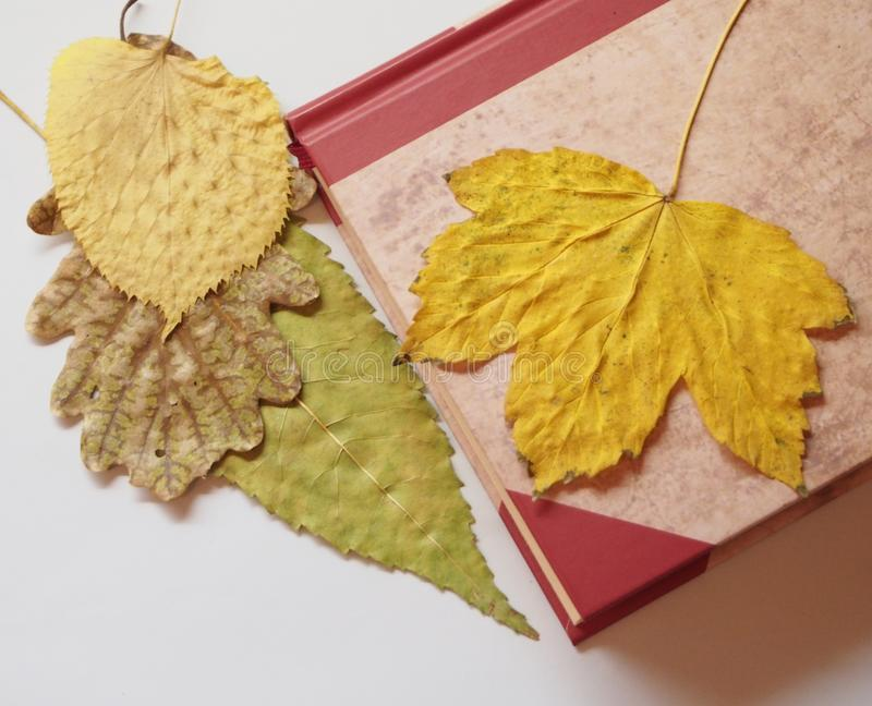 A book and autumn stock photo