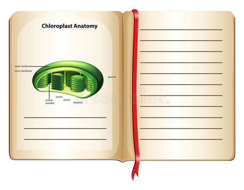 Book with chloroplast anatomy on page. Illustration royalty free illustration