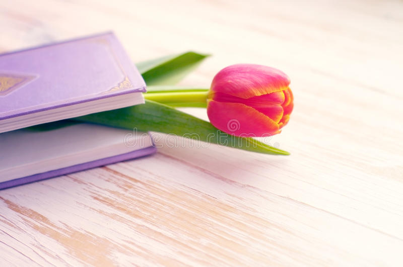 Book and one pink tulip stock photography
