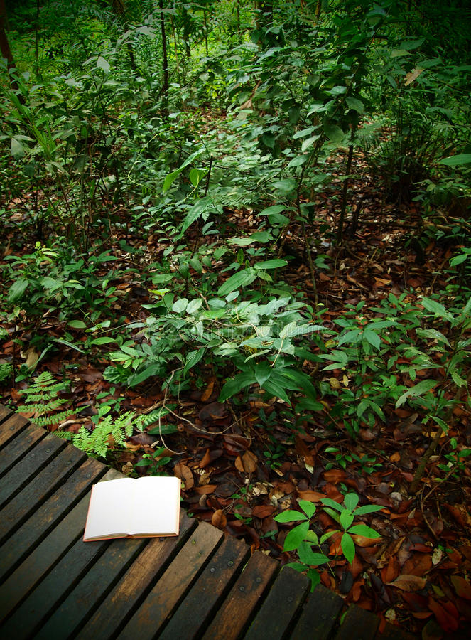 Download Book On Rainforest Trail, Nature Background Stock Photo - Image: 12428530