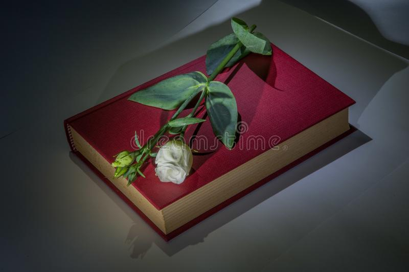 Book with rose stock photography