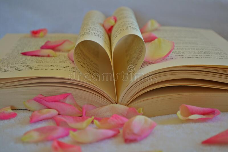 Book With Rose Petals Free Public Domain Cc0 Image
