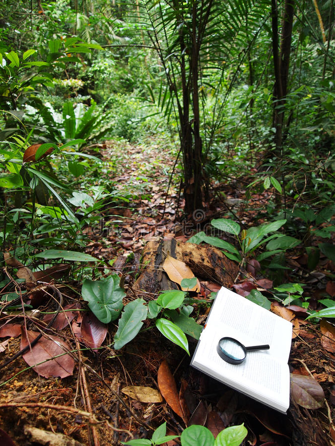 Download Book In Tropical Rainforest Stock Image - Image: 12428609