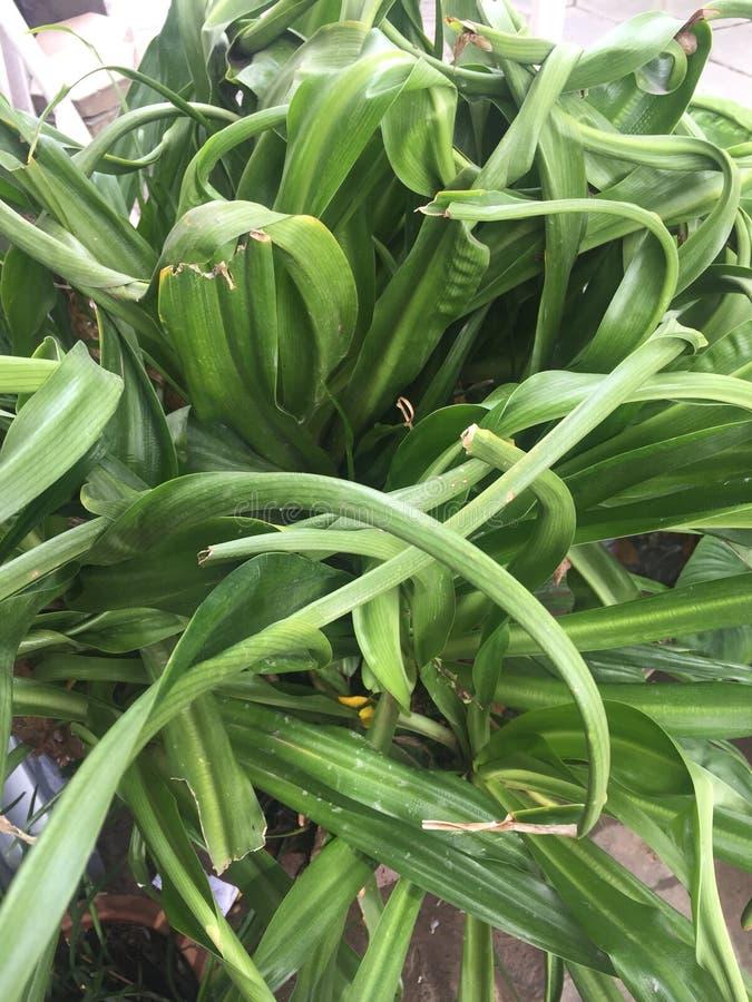 Green Flower stock image