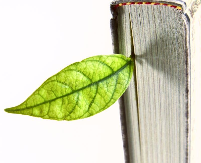 bookmark стоковое изображение