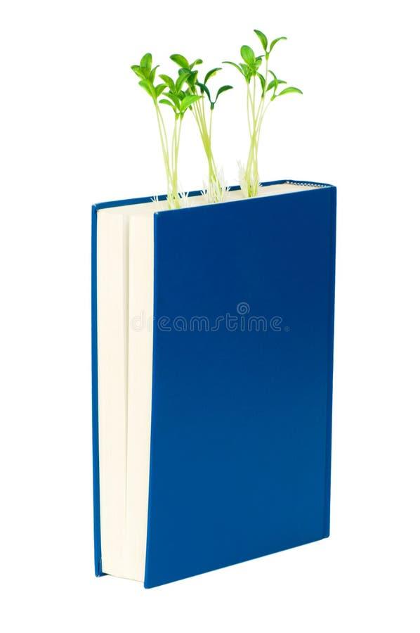 books begreppskunskap royaltyfria foton