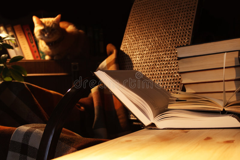 Books And Cat stock photo
