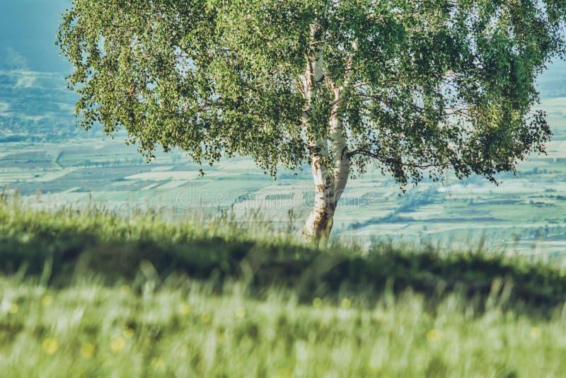 Boom alleen op een heuvel met groen gras royalty-vrije stock foto