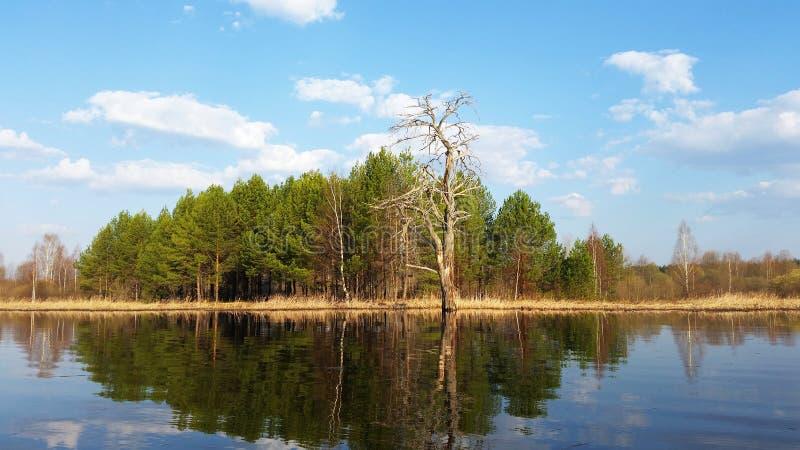 Boom bij het meer stock fotografie