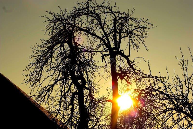Boom bij zonsondergang stock foto