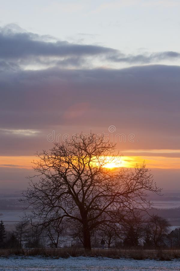 Boom bij zonsondergang royalty-vrije stock foto