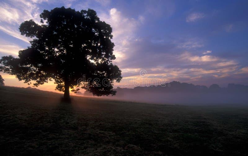 Boom bij zonsopgang stock afbeelding