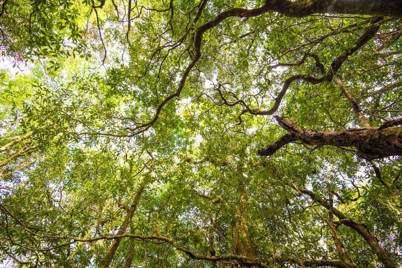 Boom in bos stock afbeeldingen