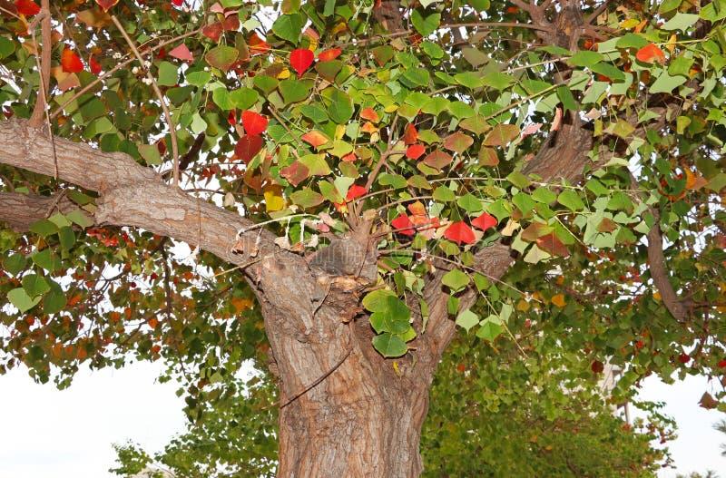 Boom in de herfst, rode en groene bladeren royalty-vrije stock afbeelding