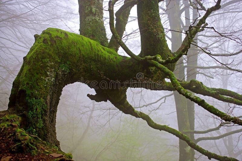 Boom in de mist stock foto