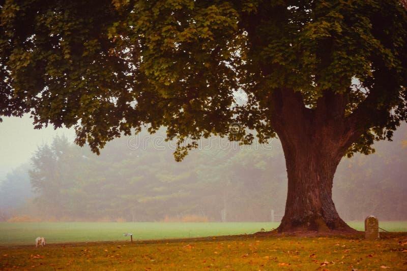 Boom in de mist van de begraafplaats royalty-vrije stock foto's