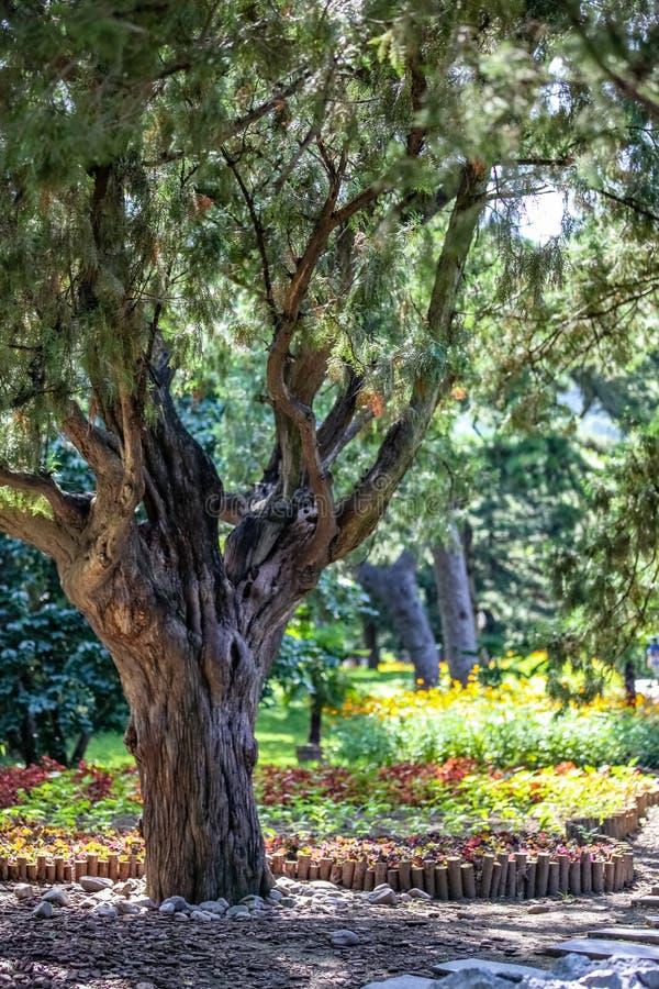 Boom in de voorgrond en een goed gehandhaafde tuin met kleurrijke installaties op de achtergrond stock foto