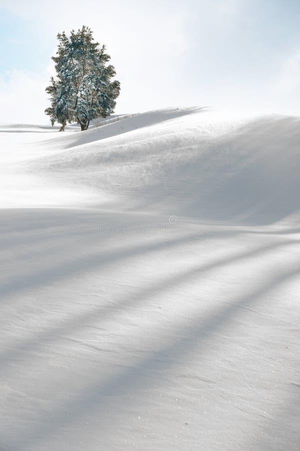 Boom in de winter royalty-vrije stock afbeeldingen