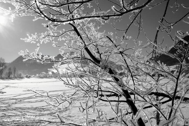 Boom in de winter royalty-vrije stock foto