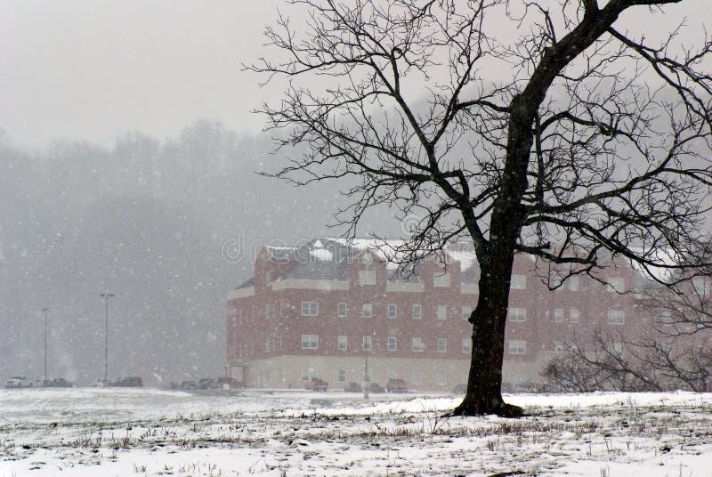 Boom in de winter met sneeuw stock afbeelding