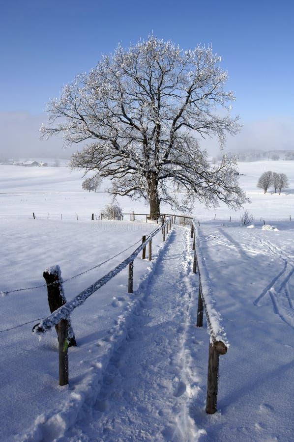 Boom in de winter met sneeuw stock foto's