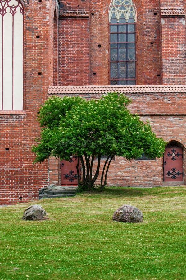 Boom dichtbij de muur van de kathedraal op een groen gras De herstelde kathedraal op het Eiland Kant stock fotografie