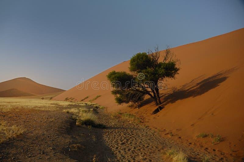 Boom die door Zand wordt gevangen royalty-vrije stock fotografie
