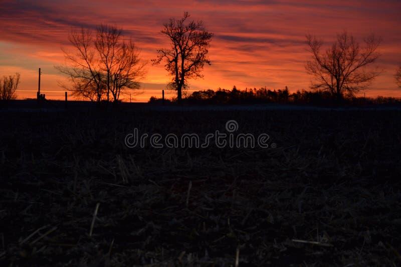 Download Boom Die Met De Zonsopgang Wekken Stock Foto - Afbeelding bestaande uit atmosfeer, gras: 39109444