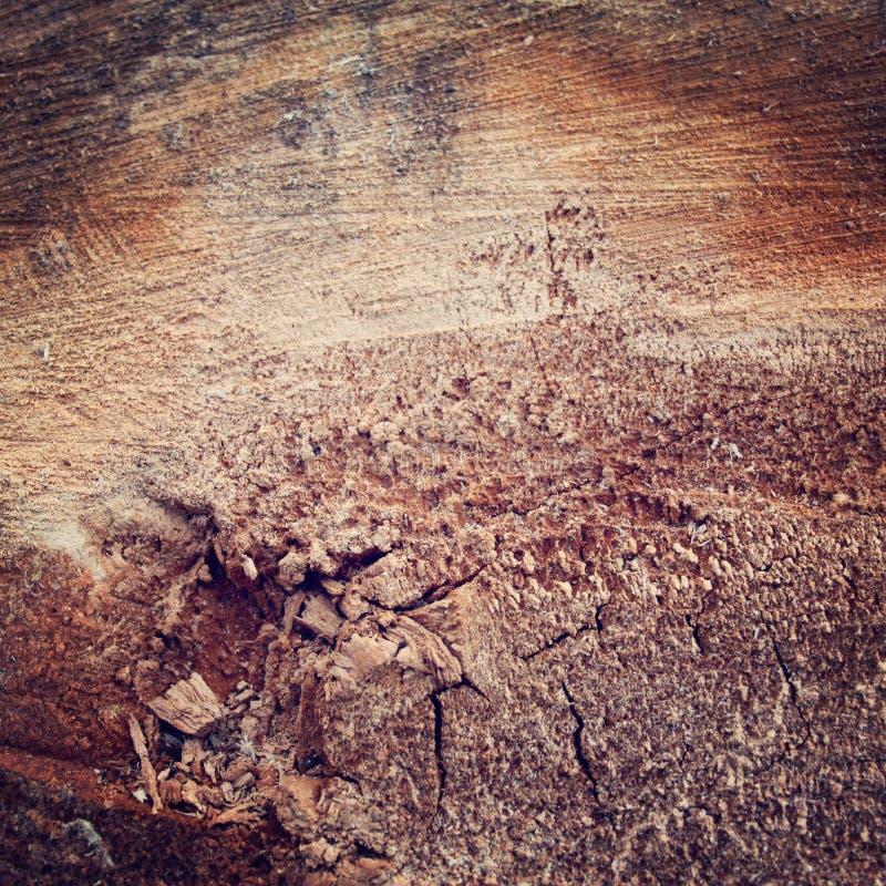 Boom die - retro filter worden verminderd Sluit gekweekt hout stock foto