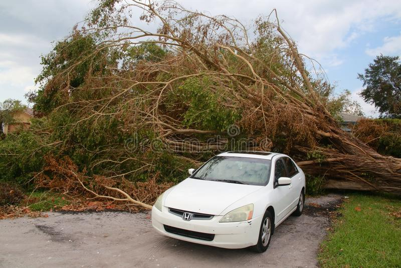 Boom Doen ineenstorten Orkaan Irma stock foto's
