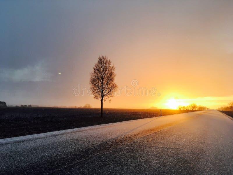 Boom door weg bij zonsondergang royalty-vrije stock foto