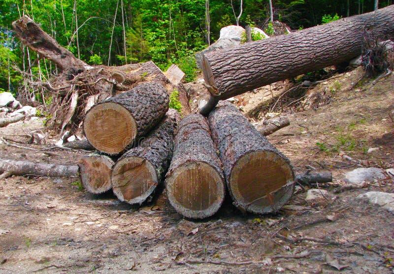 Boom in een bos in Zes lange logboeken apart wordt gesneden dat stock foto's