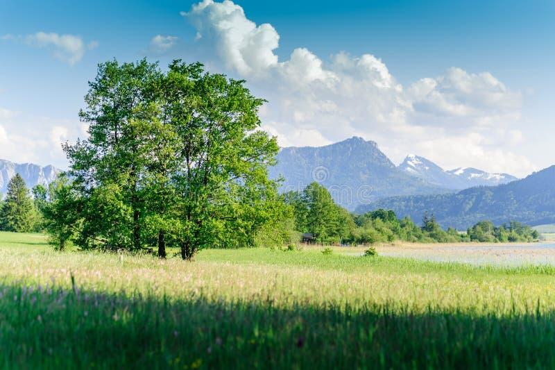 Boom in een Oostenrijks de zomerlandschap royalty-vrije stock afbeelding