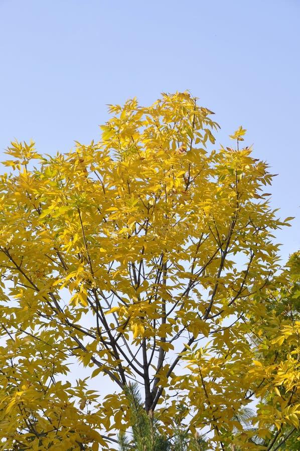 Boom in een park in de herfst met gele bladeren royalty-vrije stock afbeeldingen